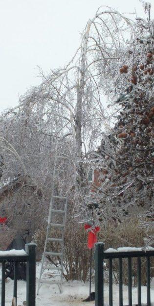ice storm toronto 2013 - pic9