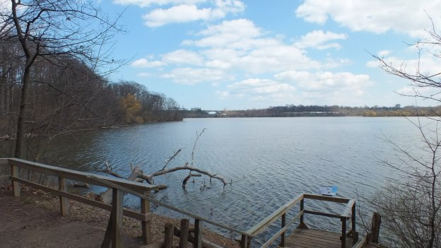 hamilton harbour where carp were jumping - cootes paradise swamp - Ontario