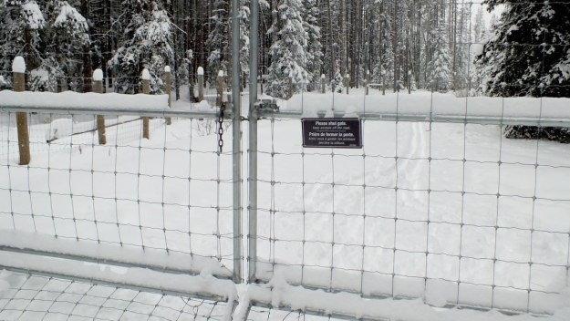 animal control gate at banff national park