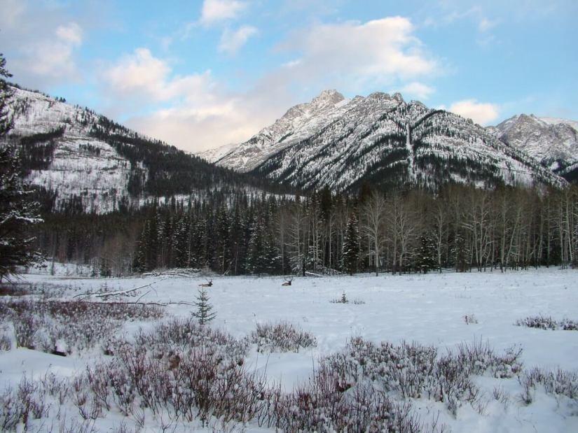 elk on snowy meadow near lake louise