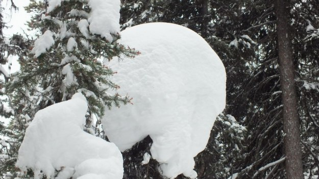 Heavy snow on the trees on the Lake Agnes Trail at Banff National Park, in Alberta, Canada