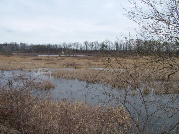 An image of the wetlands at Grass Lake near Cambridge, Ontario, Canada.