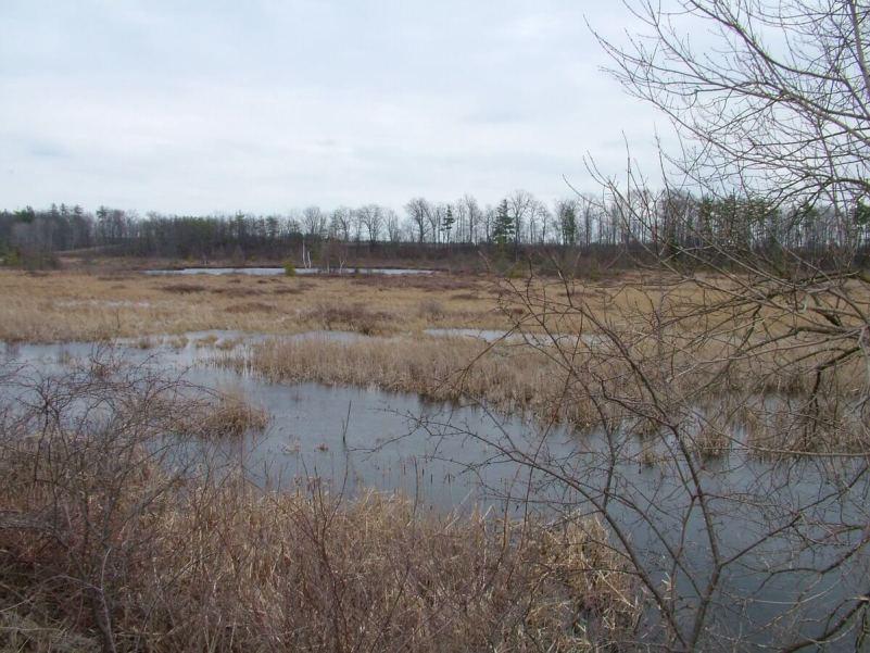An image of Grass Lake in the early spring near Cambridge, Ontario.