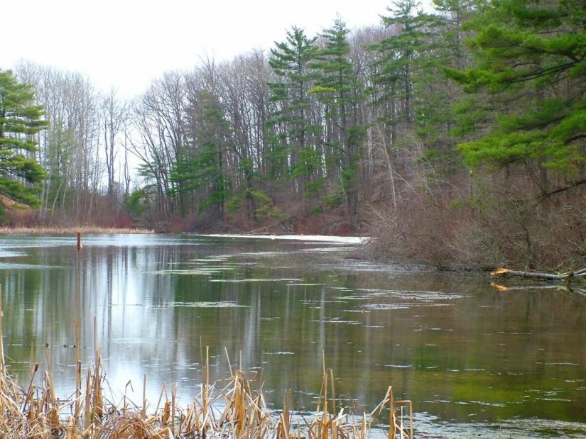 pond_dickson Conservation area_ontario 2
