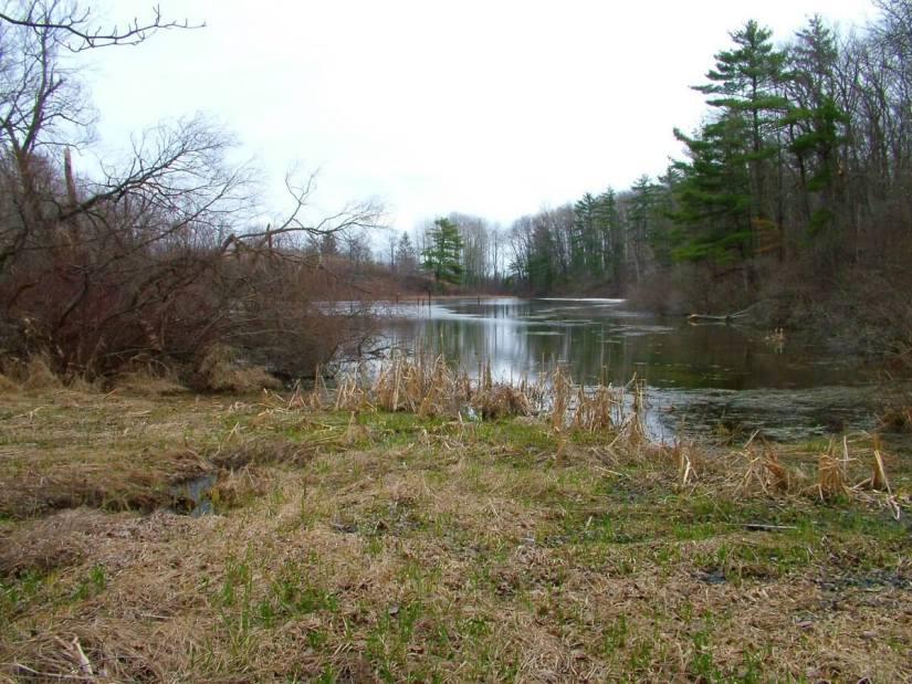 pond_dickson Conservation area_ontario