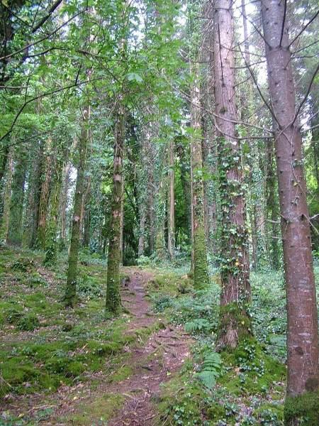 trail through forest at ashford castle