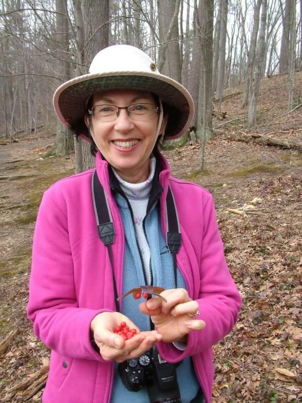 wintergreen berries_dickson Conservation area_ontario 4