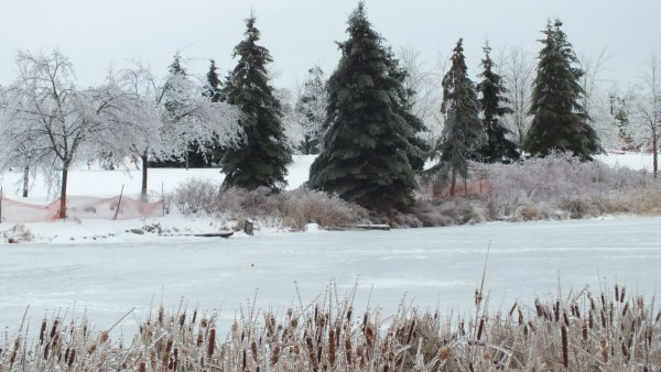 frozen pond at milliken park_toronto_ontario 2