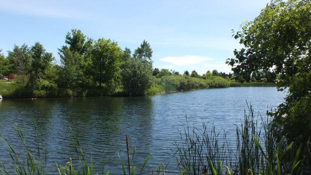 milliken park pond - toronto - ontario - july 2014