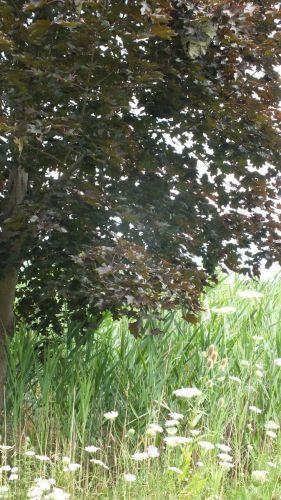hornets nest in tree in milliken park - toronto - ontario