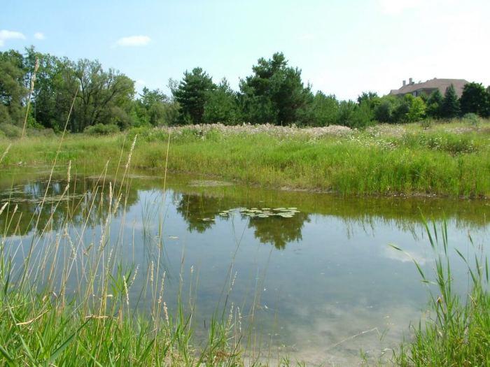 pond at - atkinson park wetland, aurora - pic 1