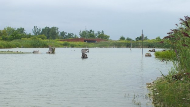 wetlands at tommy thompson park - toronto - ontario 6
