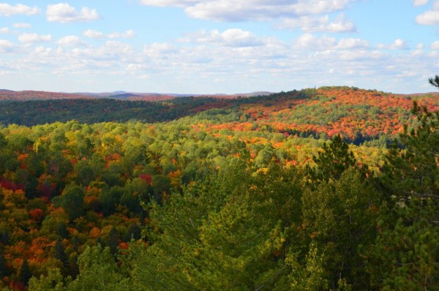 fall colors in algonquin park - fall 2014 - pic 11