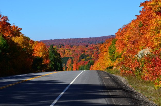 fall colors in algonquin park - fall 2014 - pic 16