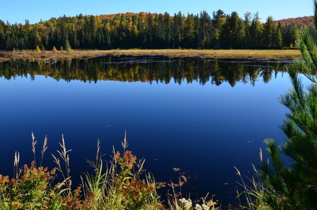 fall colors in algonquin park - fall 2014 pic 24