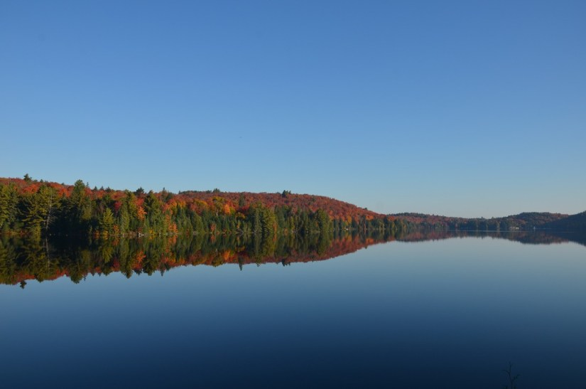 fall colors in algonquin park - fall 2014 pic 26