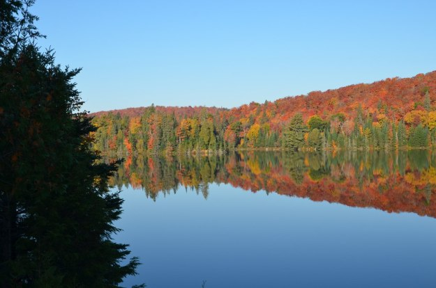 fall colors in algonquin park - fall 2014 pic 27