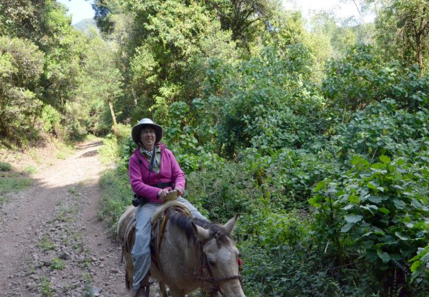 Jean riding a horse to the Cerro Pelon Monarch Butterfly Sanctuary, near Macheros, Mexico