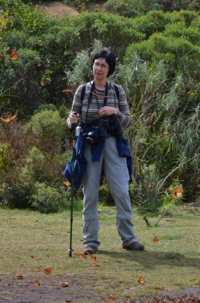 photograph of Jean observing the Monarch butterflies in the meadow at El Rosario Biosphere Reserve in Mexico
