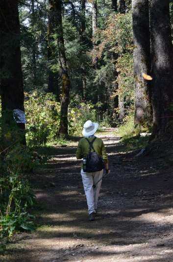 Jean on the hiking trail at Sierra Chincua Butterfly Sanctuary near Angangueo, Mexico