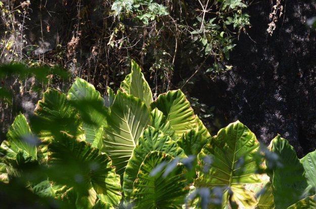 Plants growing along the riverside hiking trail at Hotel Rancho San Cayetano in Zitacuaro, Mexico