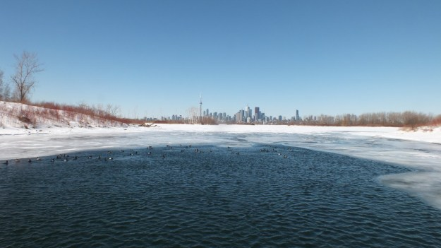 toronto skyline from tommy thompson park, toronto, ontario