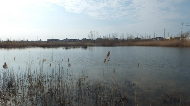 Wetlands in Whitby, Ontario, Canada