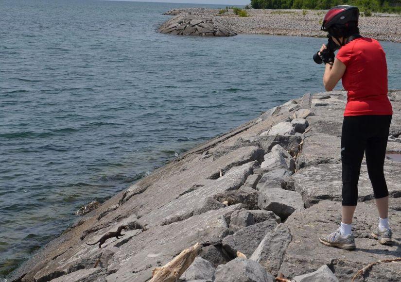 mink, lake ontario, rouge national park, toronto, 19