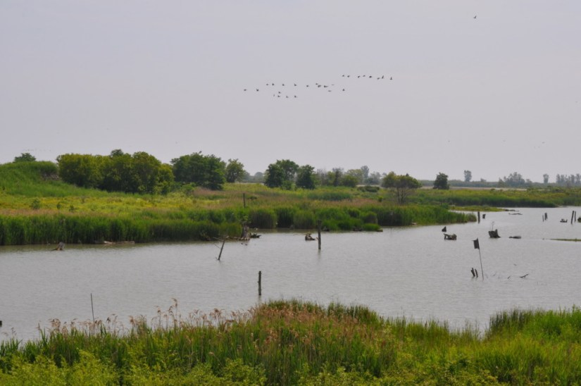 Wetlands at Tommy Thompson Park in Toronto, Ontario, Canada