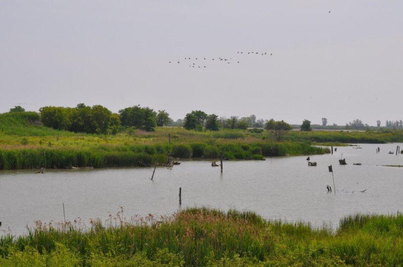 tommy thompson park, wetlands, toronto, ontario