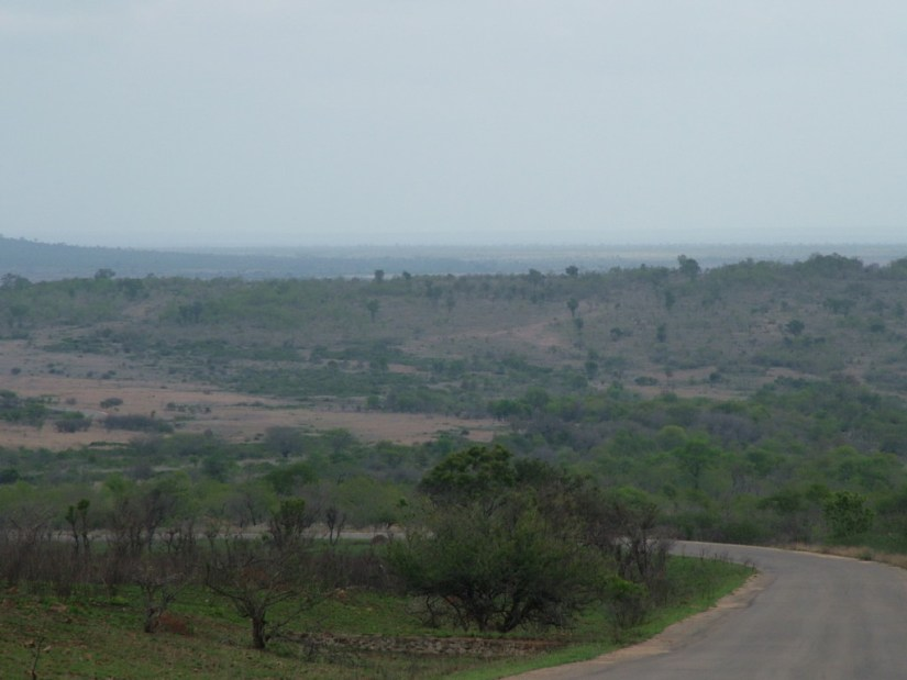 Roadway in Kruger National Park, South Africa