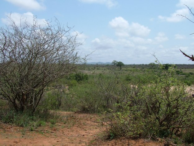 Savanna countryside inside Kruger National Park, South Africa