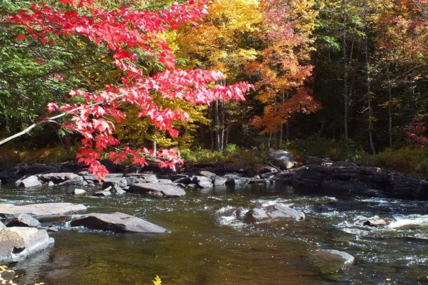 fall colors, oxtongue river, ontario, pic 4