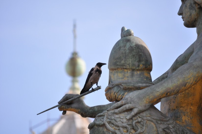 A hooded crow sitting on a statue at Complesso del Vittoria, Rome, Italy