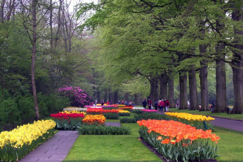 tulip beds at Keukenhof Gardens, holland