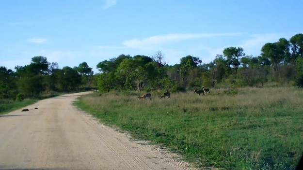 dirt road, kruger national park, south africa, pic 1