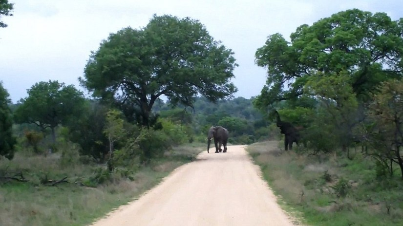 An image of an elephant on a dirt road in Kruger National Park, South Africa. Photography by Frame To Frame - Bob and Jean.