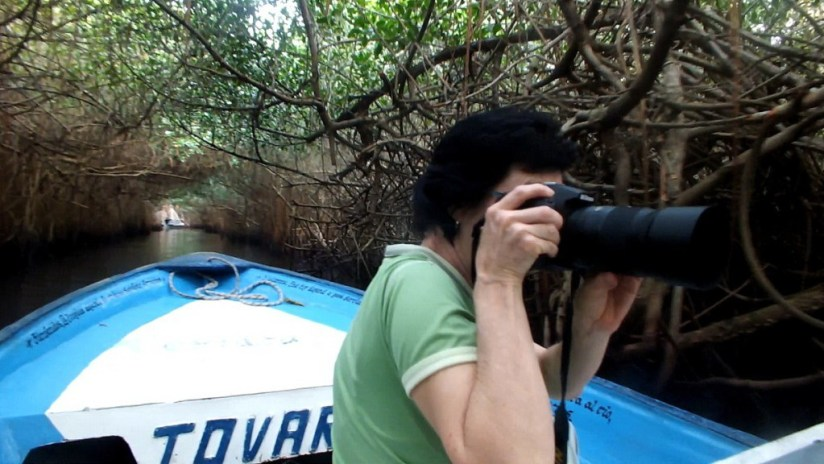 Photo of Jean taking a photo of a White Ibis in the mangrove swamp near San Blas, Mexico