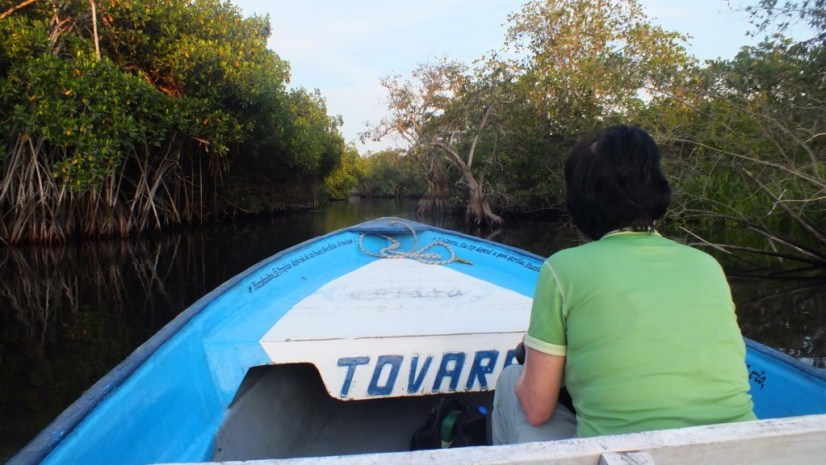 Photo of Jean searching for birds in the mangrove swamp near San Blas, Mexico