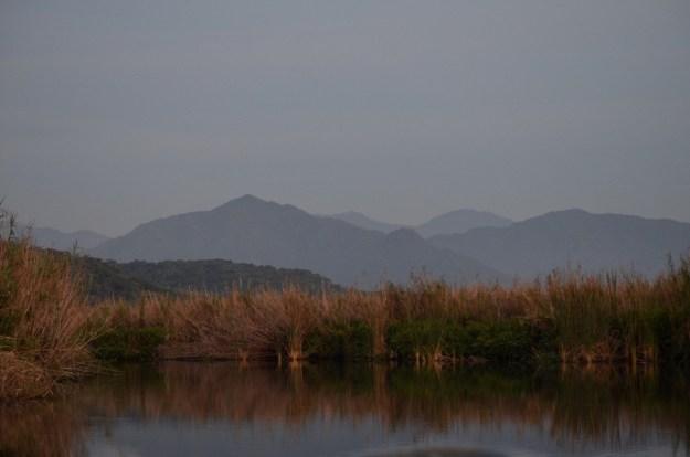 Photo of dusk in the mangrove swamp near San Blas, Mexico