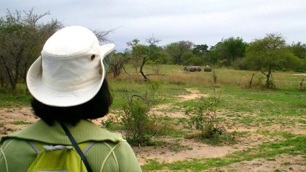 rhinos on armed safari, kruger national park, south africa, pic 1