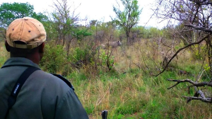 rhinos on armed safari, kruger national park, south africa, pic 6