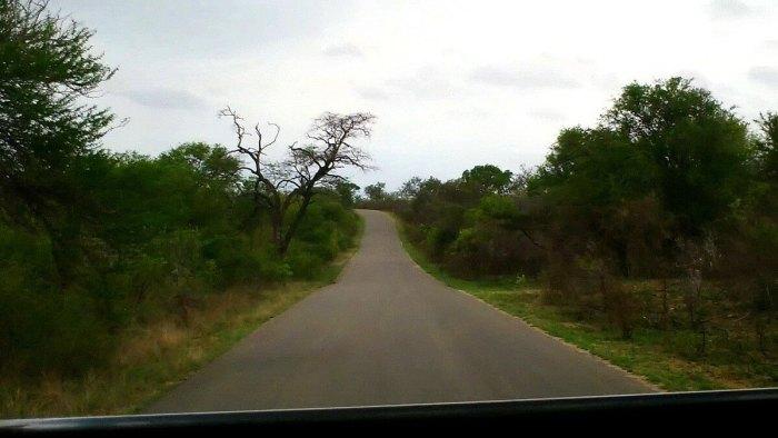 roadway, kruger national park, south africa, pic 2