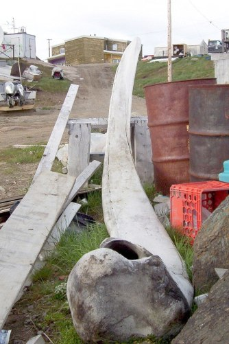 photograph of a bowhead whale jawbone in a laneway in Pangnirtung on Baffin Island, Nunavut, Canada