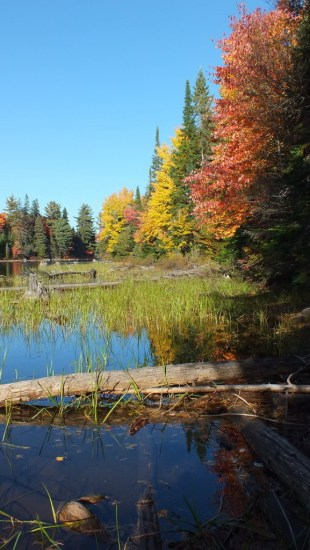 fall colors along the tea lake shoreline, algonquin park, ontario, canada