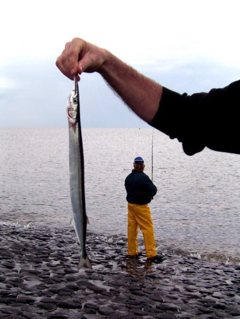 fish caught in the north sea, the netherlands