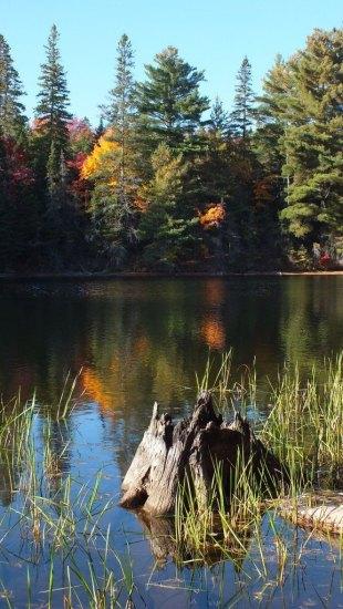 tea lake shoreline, algonquin park, ontario, canada