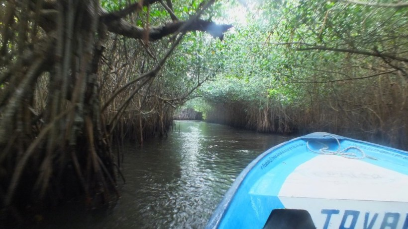 boat through the mangrove swamp, san blas, mexico. pic 5