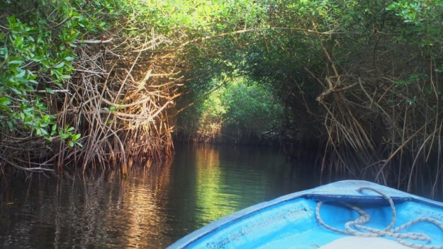 boat through the tunnels in the mangrove swamp, san blas, mexico