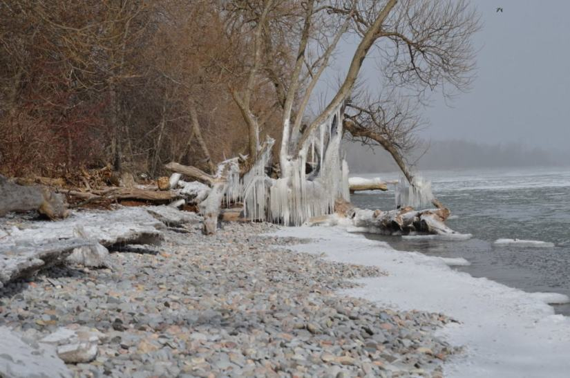ice coated shoreline and trees, lake ontario, ontario, canada, 1